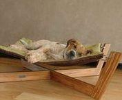 pets > rest + play + hideout