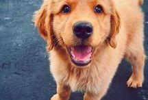 Cute Animals | Animales Bonitos / Cute animals photos | Fotos de animales bonitos