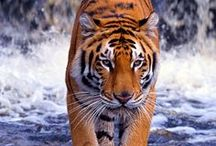 Animals - Wild and Free