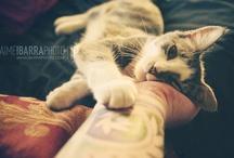 ☯ Chats/Cats ☯ / Mwraw ?