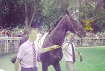 Triple Threat by Monsun/Lyphard / Triple Theat 3 year old Horse - Colt Owner(s): Gary Barber - Team Valor L.L.C. - Bred: (FR) by Gary Barber - Team Valor - Pedigree: Monsun - Drei by Lyphard