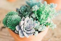 Цветы. Растения | Flowers. Plants