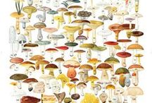 Mushroom appreciation