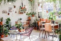 Jardin intérieur / Petit jardin intérieur et potager d'appartement.
