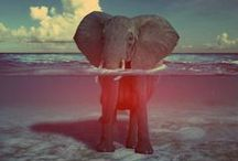Animals and other amazing creatures / by Jay