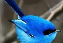 Beautifull, Cute and weird animals