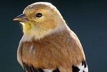 ✫  BIRDS ✫ / Awesome colors..GOD's creation again..  Birds amaze and delight us. Their beauty captivates us.  / by ✿ Aarthi Vijayasarathy ✿