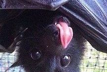 Bats ♡