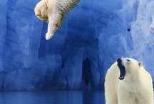 Animal World / by Teri Grimes Brown
