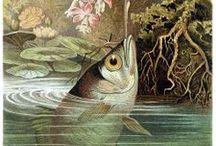 Zoo/Botanical Illustrations