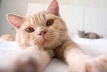Pets / Fofura pura quebrando a internet! Os mais animais mais fofos da web estão aqui.