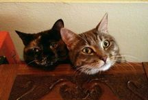 My Cats