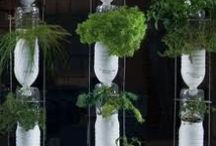 Window Farms by Hyrdroponic Farming / Be a city farmer, all you need is a window & imagination