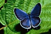 Butterflies Are Free / Free things in life and in nature. Coupons, Freebies, Contest, Sweepstakes, & Information.   / by Have Heart Daily