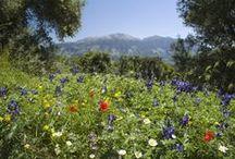 Beautiful Crete / Omorfi Kriti, some places I love