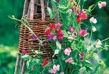 Kerti ötletek/Garden Ideas