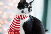 meow / cats!!!