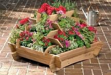 My Virtual Garden
