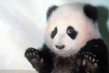 Pandas / by Linda Diciaula