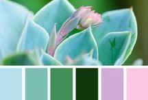 Color inspiration  / by Mel Griffith