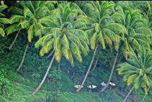 Mentawai Islands...Surf Paradise / The amazing Mentawai Islands off West Sumatra, Indonesia.