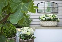 Guus ♥ Gardens / Luisteren naar het gezang van de merels, kijken naar de bloeiende bloemen en genieten van de warme zon... / by Guus