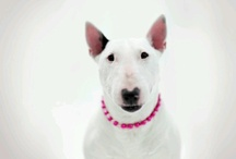 Guus ♥ Bull Terriers / by Guus