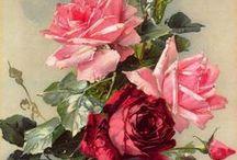 Rosa. Роза / Картинки с розами.