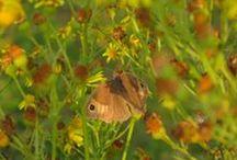 Wildlife / Skab mere liv i haven og se hvad det kan føre til...