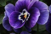 Beautiful flowers / Garden loves...