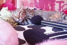 Tete (Don Cangrejo) / Mi tigre gordote y cascarrabias... #cat #mylove #tecomolavida