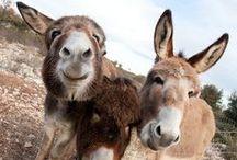 dear donkeys