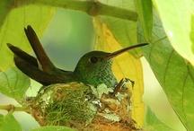 Birds & Bird Nest's .  / by Marion Phillips-Eaton