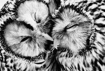 owls ;)