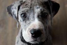 rare breeds!!!!!!!!!