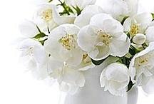 Art floral / Entre simplicité et sophistication