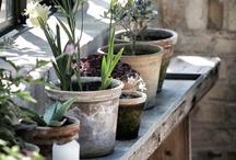 Au jardin ... les tables de rempotage