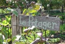 Au jardin ... le potager