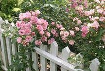 Au jardin ... les roses / by Danièle