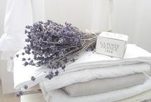 En Provence ... la lavande