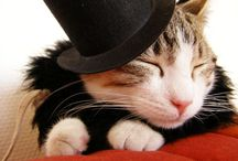 hat... crown... headband...
