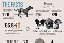 Pet Information / Tips to Keep Your Pets Happy and Healthy