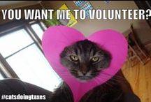 Volunteer Funnies