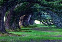 #Expo2015 | Trees