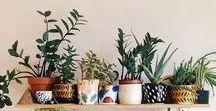 Plants, Hortinha e Flowers