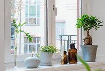 De aromas, plantas y flores / Flores, plantas y aromas para home staging