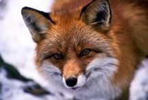 What does the fox say / Don't buy real fur! Buy fake fur that's just as pretty!