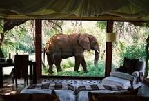 Tribal-Safari Lodge