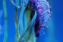 ~Nautilus~ / by Bethany F.