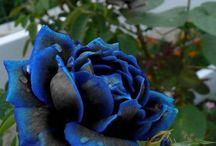 Flower pics / by Debbie Berg